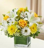 Yellow & White Healing Tears