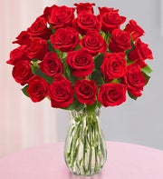 Festive Red Roses - Two Dozen