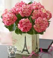 Flourishing Pink Hydrangea