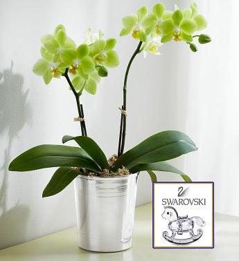 Swarovski � Phalaenopsis Orchid