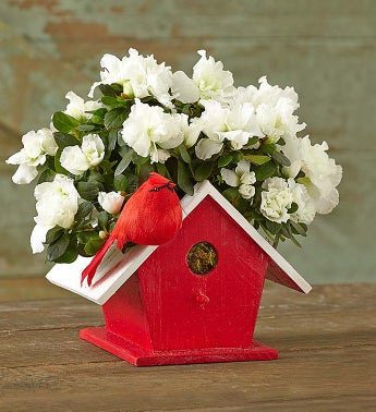 Birdhouse of Blooms? for Christmas
