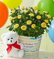 Birthday Wishes Rose Plant