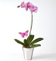 Flirt - Pink Phalaenopsis by Isaac Mizrahi