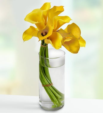 Captivating Calla Lilies?