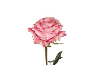Gelato Roses- Special Order!