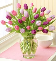 Pink Purple and Lavender Tulips