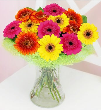 Germini Fresh Vibrant Flowers & Vase
