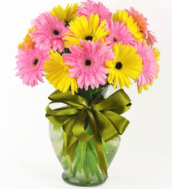 Yellow and Pink Gerbera Daisies