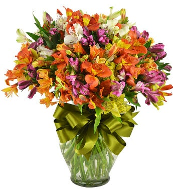 40 Peruvian Lilies