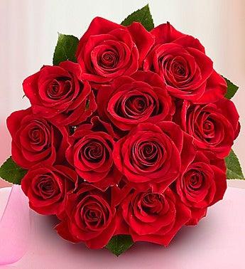 Blaze of Roses