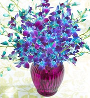 Ocean Breeze Orchids, 10-20 Stems