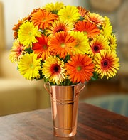Assorted Fall Gerbera Daisies + Free Vase