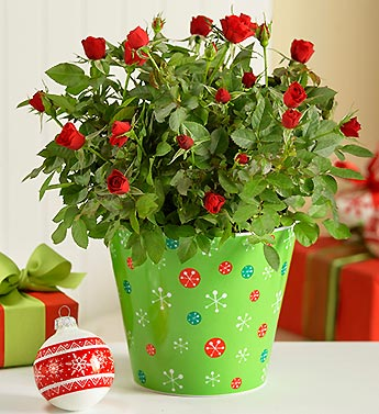 Holiday Rose in Snowflake Planter
