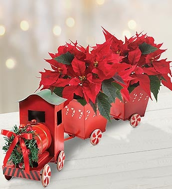 Poinsettia Plant in Tin Train