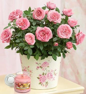 Classic Budding Rose
