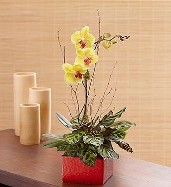 Zen Orchid Dish Garden