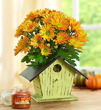 Bird House of Blooms? for Fall