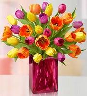 Assorted Tulips, 15-30 Stems