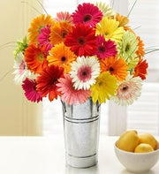 Happy Gerbera Daisies, 12-24 Stems + Free Vase