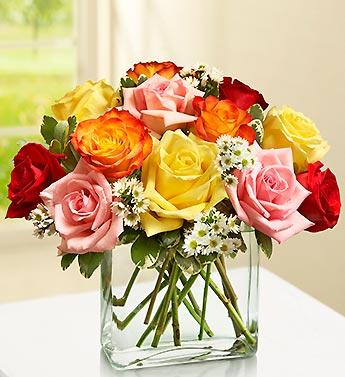 Modern Roses - One Dozen