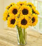Sunflower Bouquet, 10-20 Stems
