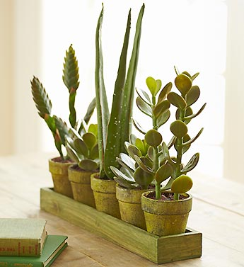 Artificial Succulents/Aloe Plants on Green Tray