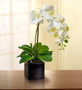 Silk Phalaenopsis Orchid