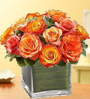 Modern Roses One Dozen Orange
